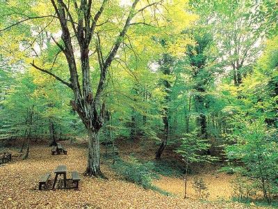 Uno scorcio della Foresta Umbra