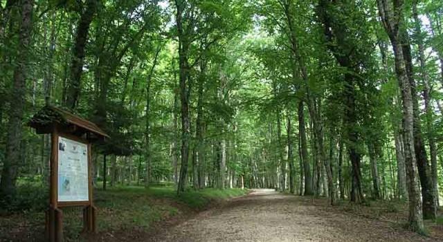 Parco Nazionale del Gargano - Foresta Umbra
